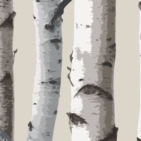 Woods Wallpaper Birch Tree FD31051