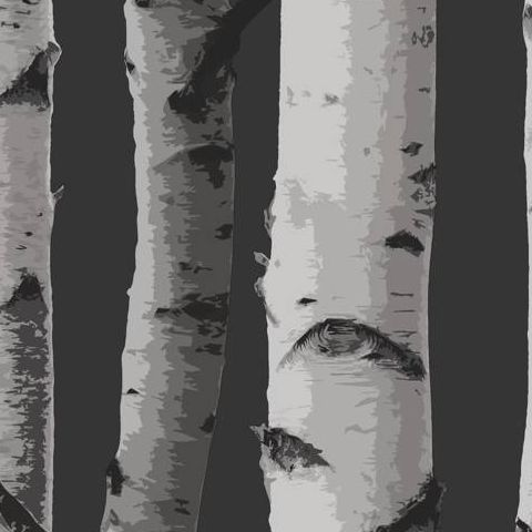 Woods Wallpaper Birch Tree FD31052