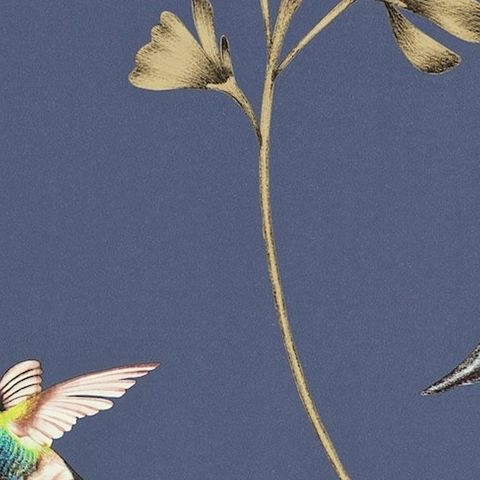 Harlequin Amazilia Wallpaper-Amazilia Hummingbird 111059