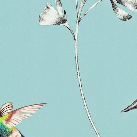 Harlequin Amazilia Wallpaper-Amazilia Hummingbird 111060