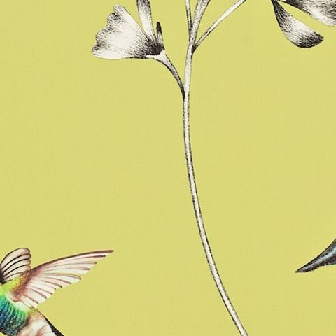Harlequin Amazilia Wallpaper-Amazilia Hummingbird 111061