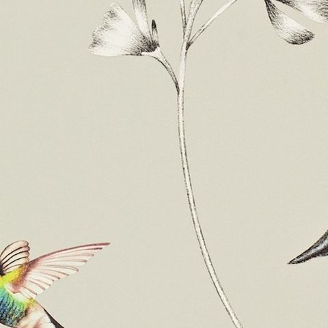 Harlequin Amazilia Wallpaper-Amazilia Hummingbird 111062