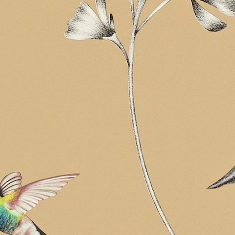 Harlequin Amazilia Wallpaper-Amazilia Hummingbird 111063