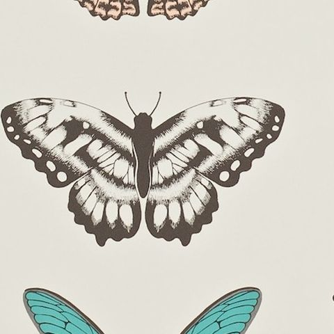 Harlequin Amazilia Wallpaper-Papilio Butterfly 111077