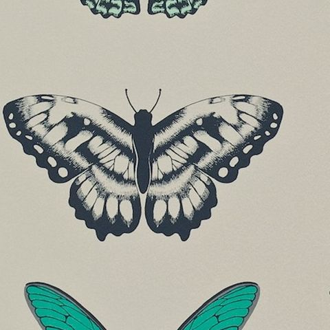 Harlequin Amazilia Wallpaper-Papilio Butterfly 111078