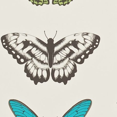 Harlequin Amazilia Wallpaper-Papilio Butterfly 111079